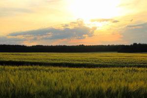 10 Ideas to Ignite Alberta's Economy